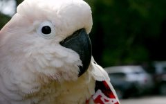 Top 5 Exotic Pets Seen Within Marco Island Florida