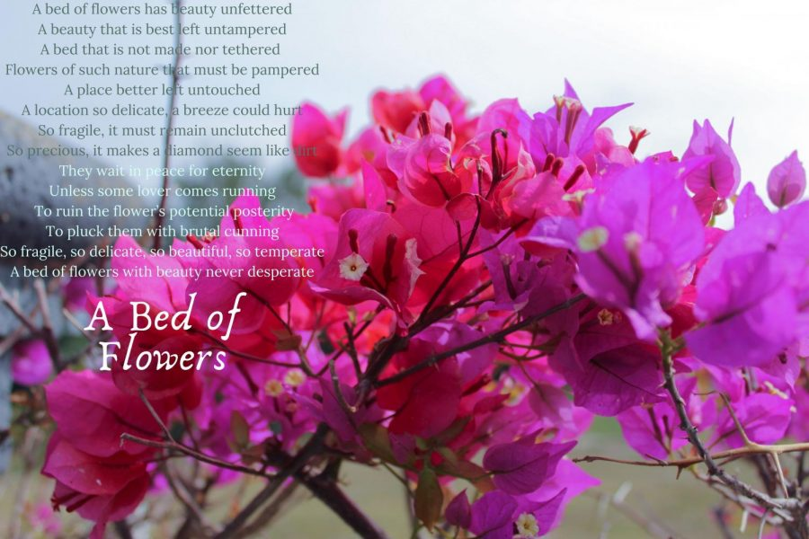 Valentine's Day Sonnet