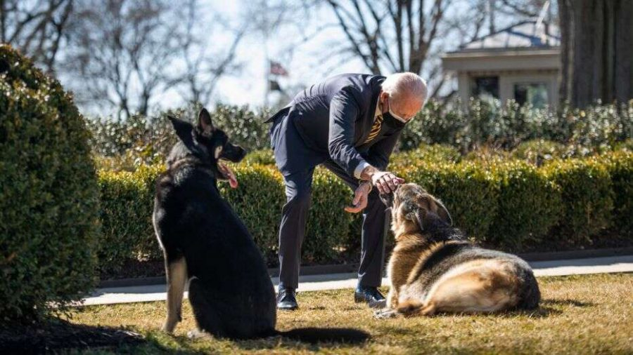 Major, President Biden's dog, has had a