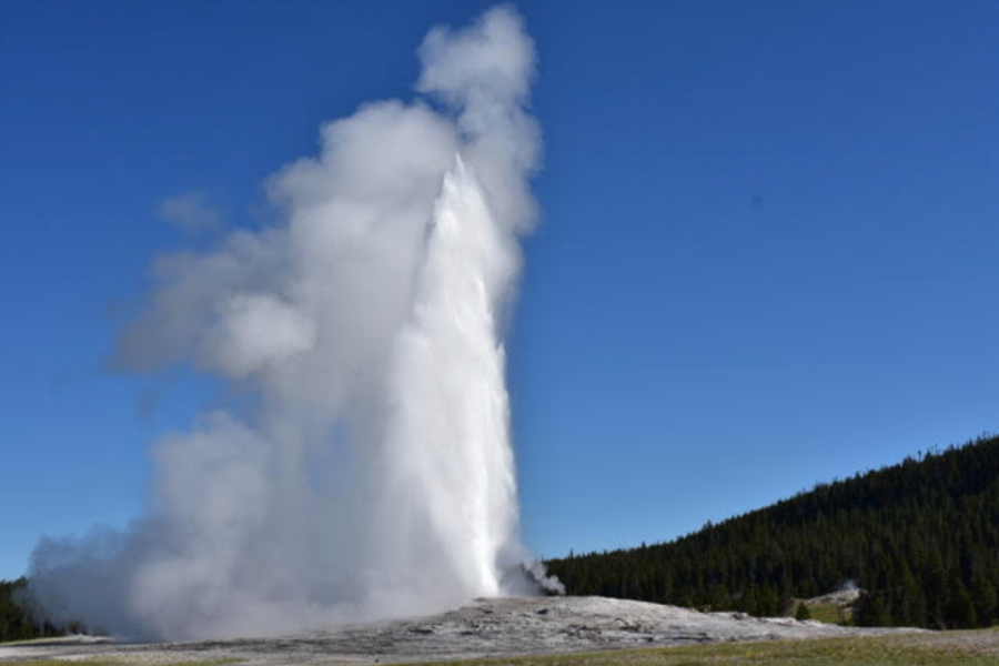 Old Faithful, living up to its name, erupts on schedule and shoots water over 100 feet into the air.