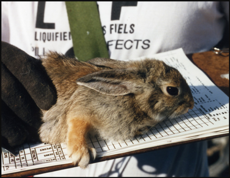 Ralph the Rabbit took the world by storm and has set in motion an animal rights movement.